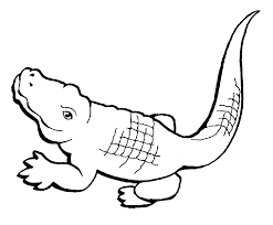 baby alligator coloring page