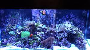 korallin biodenitrator w eheim pump marine depot
