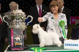 australian shepherd crufts 2016 crufts 2017 first day winners results and full schedule as