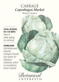 botanical sts copenhagen market cabbage seeds 1 5 grams botanical interests