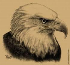 eagle pencil sketch bald eagle drawing sketch picture