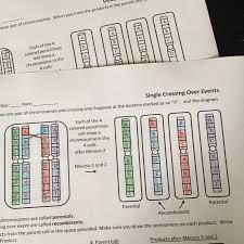 481 best work genetics images on pinterest life science ap