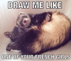 Ferret Meme - ferret memes album on imgur