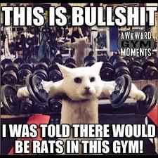 Fitness Memes - gym memes instagram