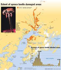 Uaa Map Spruce Beetle Devastation Returns To Southcentral Alaska U2014 And