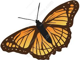 top view of an orange and black butterfly cartoon clipart vector