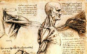 davincis drawings inventions etc da vinci anatomy book with simply