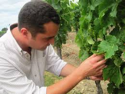 learn about petrus pomerol bordeaux learn about petrus pomerol bordeaux wine the complete guide