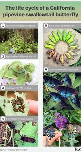 58 best learn about butterflies images on pinterest moth