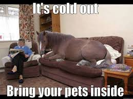 Cold Meme - it s cold out bring your pets inside if you re cold they re