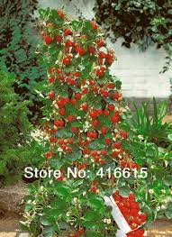 winter strawberry promotion shop for promotional winter strawberry