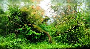 Aquascape Aquarium Plants Dici Aquascaping Classroom Classifications Of Aquatic Plants
