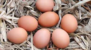 10 of the best egg laying chickens and hens chicken info