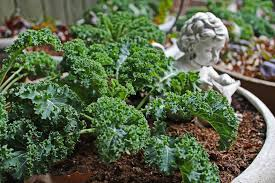 top 10 miniature vegetables to grow in pots top inspired