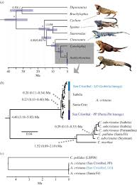 hybridization masks speciation in the evolutionary history of the