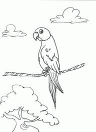 how to sketch a parrot how to draw parrots draw macaws step 1