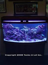 Home Aquarium Decorations Tanks A Lot Aquariums West Palm Beach Aquarium Mantenance Tropical