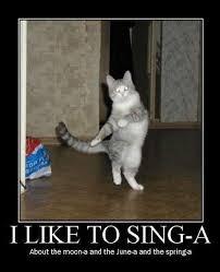 Lol Cat Meme - i like to sing a cat macros