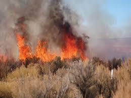 Wildfire Weed by Web Main Cheatfirea Jpg