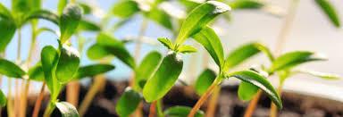 home biomax green australia