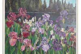 Irises How To Plant Grow by How To Grow A Bearded Iris In Zone 9 Home Guides Sf Gate
