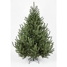 the mountain pine tree 4ft to 14ft ideas