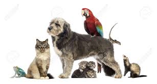 animal group images u0026 stock pictures royalty free animal group