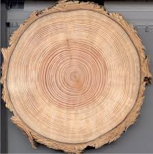 wood tree rings images How old is that tree or branch cliff lamere jpg
