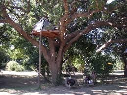 panoramio photo of tree platform csite flatdogs