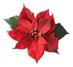 christmas flowers christmas flowers poinsettias happy holidays