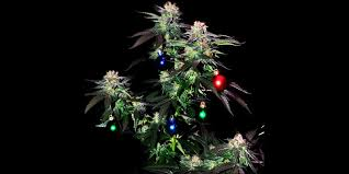 10 best weed christmas trees that will lift your christmas spirit