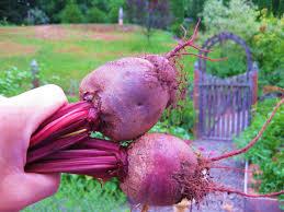 Freezing Root Vegetables - how i freeze beets