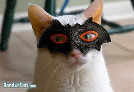 Halloween Costume Cat Ghoul Cats 10 Freakiest Scariest Halloween Cat
