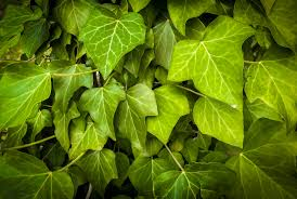 free images tree nature branch leaf flower pattern green
