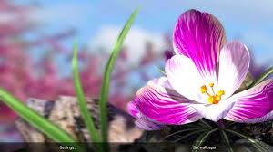 google images flower nature live spring flowers xl android apps on google play