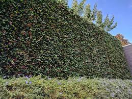 portfolio evergreen walls
