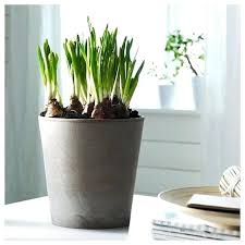 plant pots indoor amazon explore deck planters modern planters and