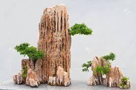 botanical garden bonsai at the miniature rocks stock photo