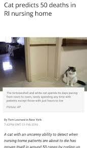 Cat Photo Album Cat Predicts Death Album On Imgur