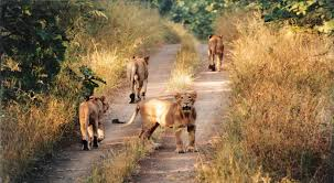 india u0027s best wildlife sanctuaries ii liketimes for philippines