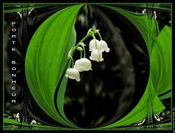 Muguet porte bonheur Fleur Nature  Convallaria Majalis