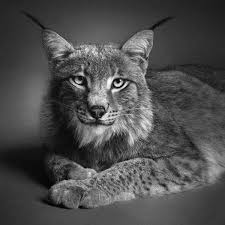 incredible pencil drawings of animals that look like photographs