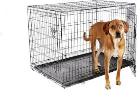 frisco fold u0026 carry double door dog crate 42 inch chewy com