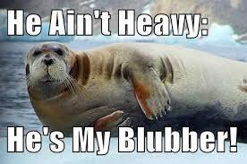 Walrus Meme - one fat walrus http www slapcaption com one fat walrus discovered