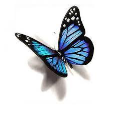 best 25 blue butterfly tattoo ideas on pinterest blue butterfly