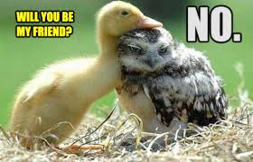 Meme Duck - duck and owl meme by zorathetwilightdrake on deviantart