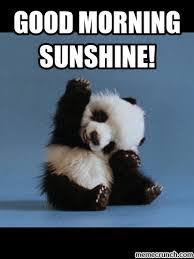 Good Morning Meme Pics - cute good morning sunshine meme images funny cute silly good