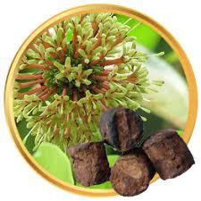 obat kuat gambir serawak www klinikobatindonesia com agen resmi
