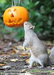 a very tricky halloween treat squirrel with its head wedged in a