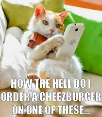 Hipster Cat Meme - hipster cat would so want a cheezburger animals pinterest